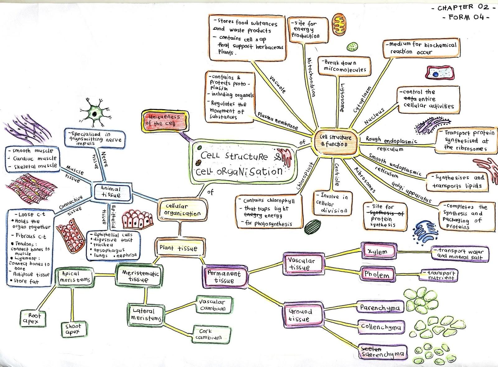 Nota Biologi Tingkatan 4 Yang Sangat Terbaik Biology A Nota Kreatif Biologi Credit to Mr Shahril Lizan