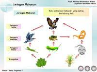 Nota Sains Tingkatan 2 Yang Baik Bab 4 Saling Bersandaran Antara organisma Hidup Dengan Persekitaran