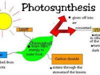 Nota Sains Tingkatan 2 Yang Sangat Hebat Powerschool Learning Sains Tingkatan 2 4 4 Fotosintesis