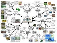 Nota Sains Upsr Yang Power Pecutan Upsri Nota Nota Ulangkaji Peta Minda Sains Tahun 6 Home