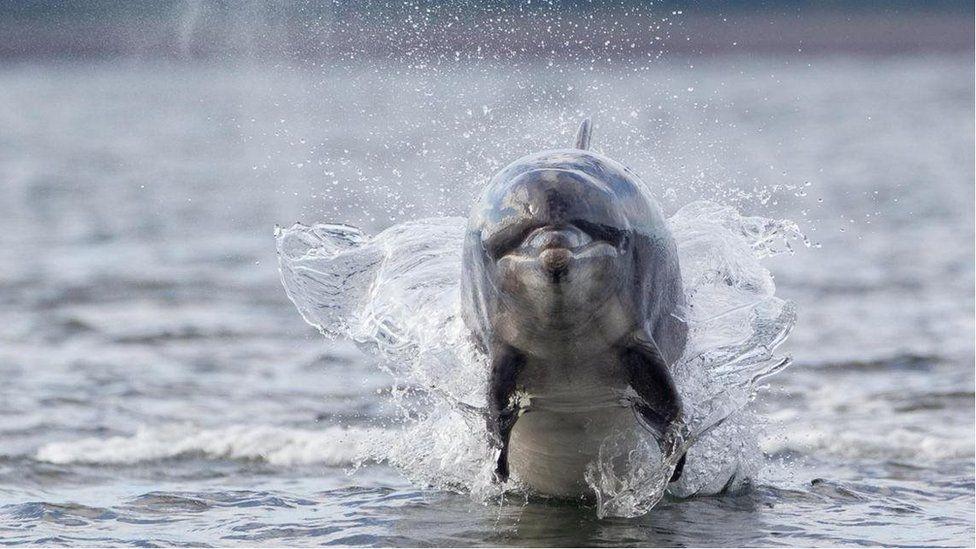 london dolphin