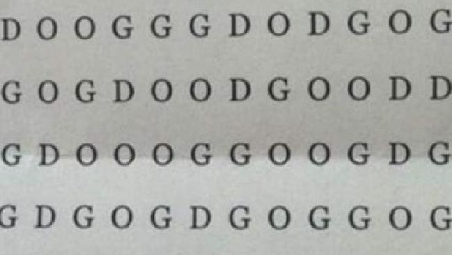 dapatkah anda menemukan kata dog anjing dalam teka teki ini ini lebih sulit dari kelihatannya lho