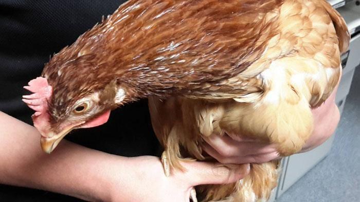 Contoh Teka Teki Makanan Ayam Yang Power Untuk Para Ibubapa