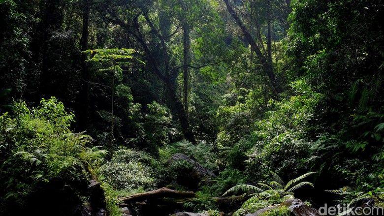 Contoh Teka Teki Masuk Hutan Yang Berguna Untuk Para Murid