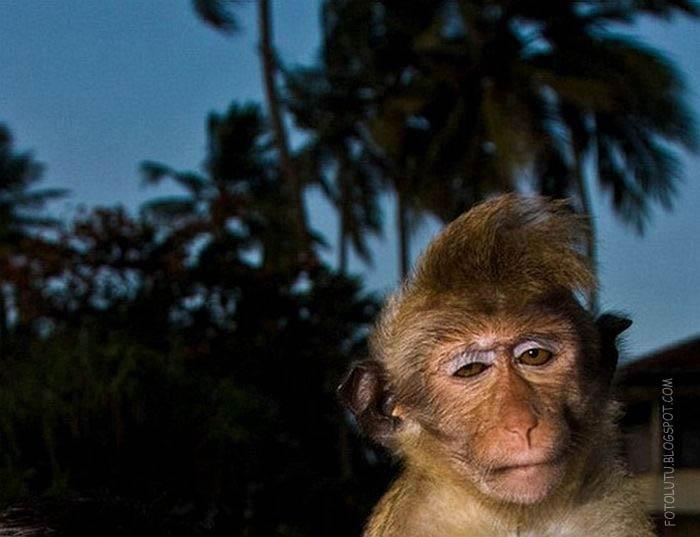 Contoh Teka Teki Monyet Yang Baik Untuk Ibubapa