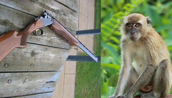 warga emas maut ditembak ipar suspek sangkakan tertembak monyet