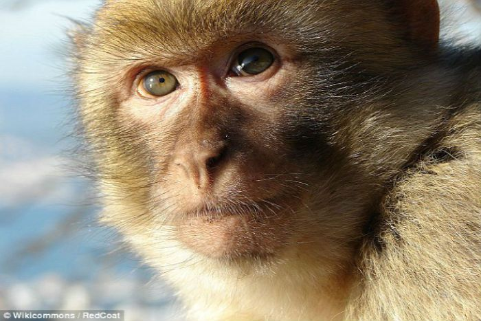 Contoh Teka Teki Monyet Yang Power Untuk Murid