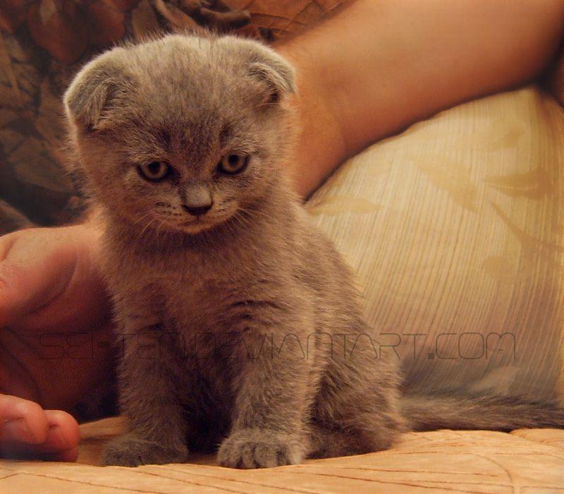 sonic the kitten by sei ten d3c84as jpg