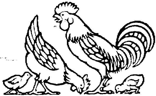 Gambar Mewarna Ayam Terbaik Mewarnai Gambar Binatang Ayam Gambar Mania