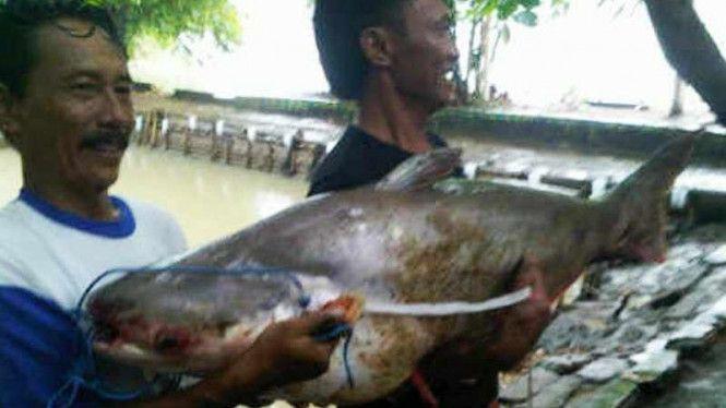 Contoh Teka Teki Ikan Paling Besar Yang Power Untuk Para Murid