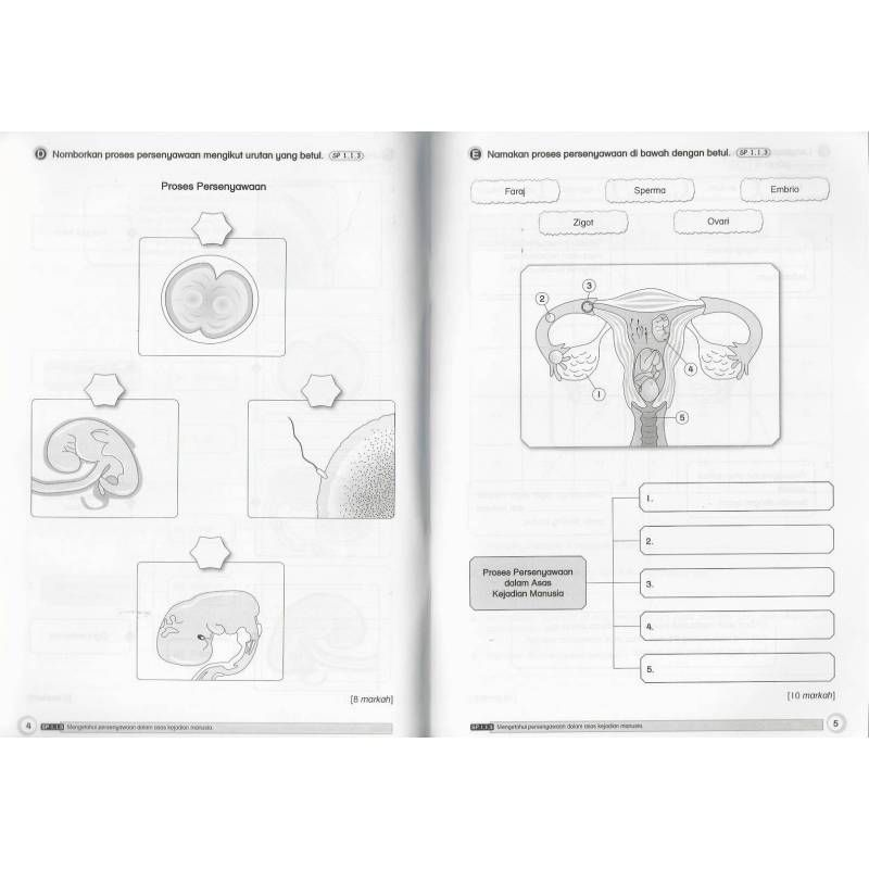 Download Dskp Pendidikan Kesihatan Tahun 6 Bermanfaat Tes topikal Standard Dskp Pendidikan Kesihatan 5 Last Peekabook