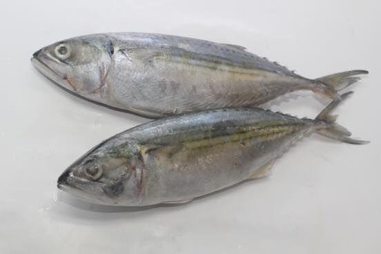 Contoh Teka Teki Ikan Di Dalam Ayam Di Luar Yang Baik Untuk Para Guru