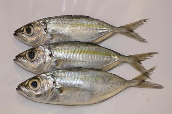 Contoh Teka Teki Ikan Di Dalam Ayam Di Luar Yang Power Untuk Para Guru