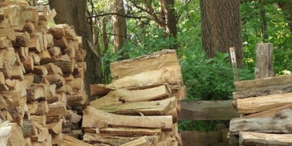 ada kucing di tumpukan kayu ini 99 netizen gagal menemukan