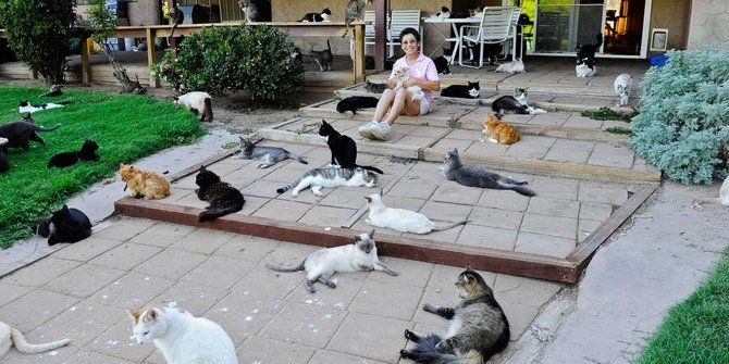 Contoh Teka-teki Kucing Yang Bermanfaat Untuk Guru-guru