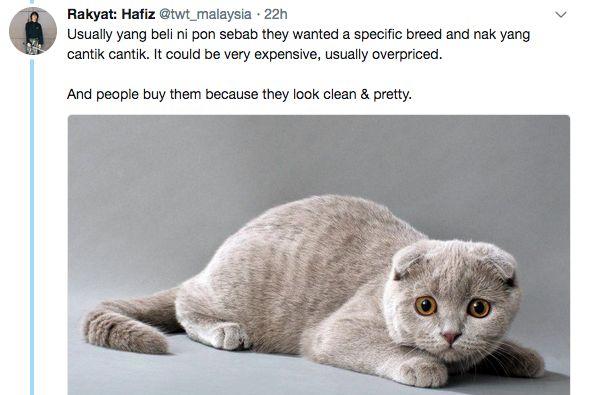 hafiz menggalakkan sesiapa yang berkemampuan untuk mengambil kucing di pusat jagaan kucing terbiar
