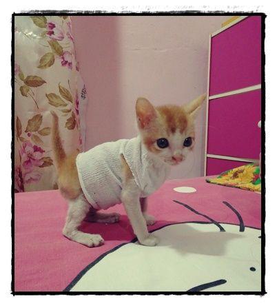 Contoh Teka Teki Kucing Yang Terbaik Untuk Murid