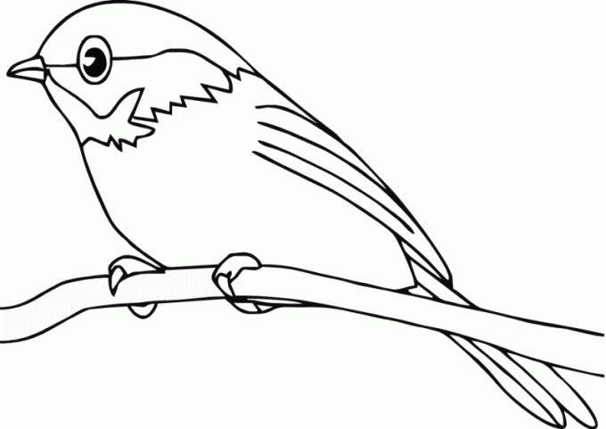 Muat Turun Segera Gambar Mewarna Burung Yang Berguna Dan Boleh Di