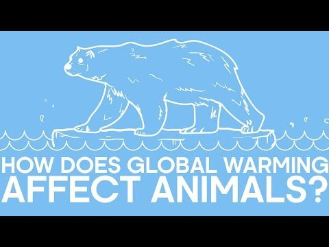 how does global warming affect animals earth unplugged