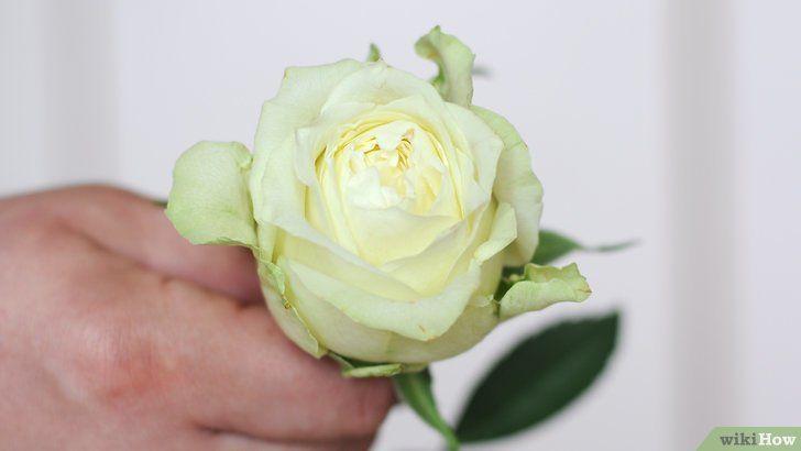 Bunga Kertas Lukisan Berguna 5 Cara Untuk Mewarnai Bunga Wikihow