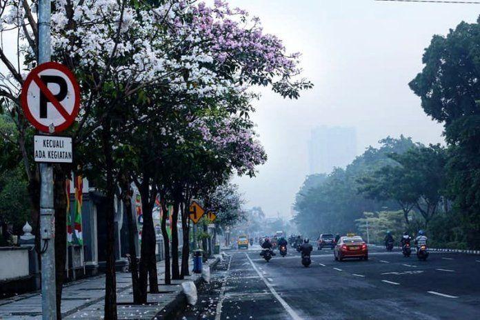 pohon tabebuya sepanjang jalan protokol surabaya istimewa