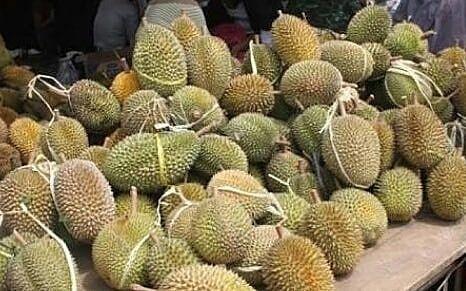 open po durian trenggalek idr 100 000 dapet 3 buah durian minat langsung japri wa di no