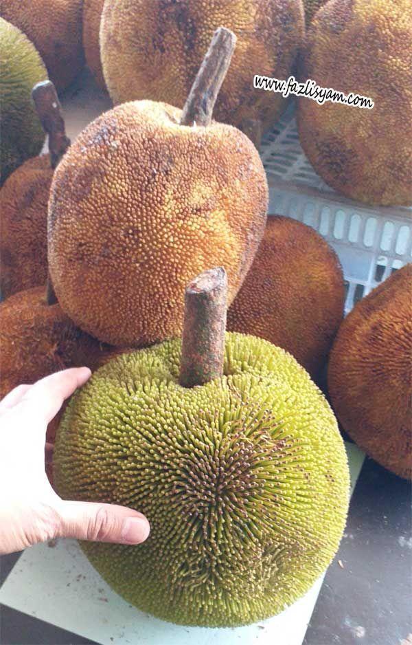 pokok terap menyerupai pokok sukun dan keduanya berada dalam genus yang sama iaitu artocarpus baru baru ini sahaja saya mengetahui terdapat dua jenis buah