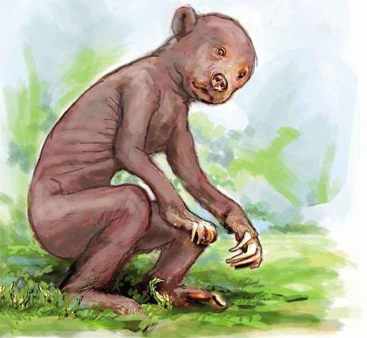 asal makhluk berkenaan gagal dikenal pasti daripada mana mana spesies haiwan yang terdapat dalam katalog fauna dunia menyebabkan penemuan bangkai misteri