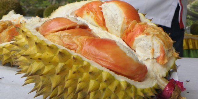 awalnya ditemukan 1 pohon durian merah di banyuwangi jpg