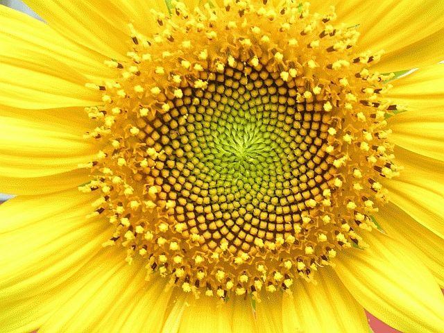 Contoh Teka Teki Mengenai Bunga Yang Meletup Untuk Para Murid