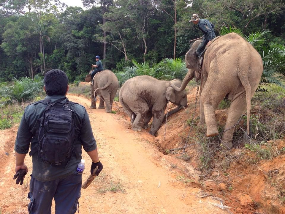 siaran media simfoni alam tajuk konservasi gajah hujung minggu ini di tv1
