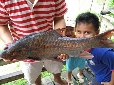 Contoh Teka Teki Tulang Seperti Ikan Yang Power Untuk Guru-guru