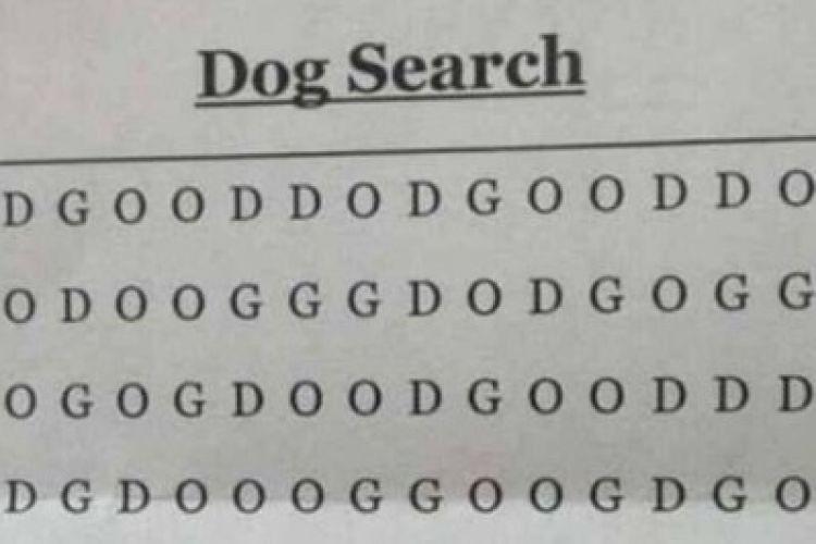750xauto dalam 3 jam hanya satu orang bisa temukan dog di teka teki ini 161224y jpg
