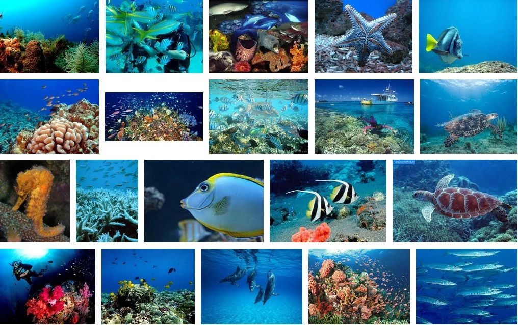 Gambar Hidupan Laut Untuk Mewarna Penting Pendidikan Seni Visual 2012