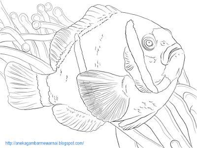 Gambar Hidupan Laut Untuk Mewarna Terhebat Aneka Gambar Mewarnai Gambar Mewarnai Ikan Di Laut Untuk Anak Paud