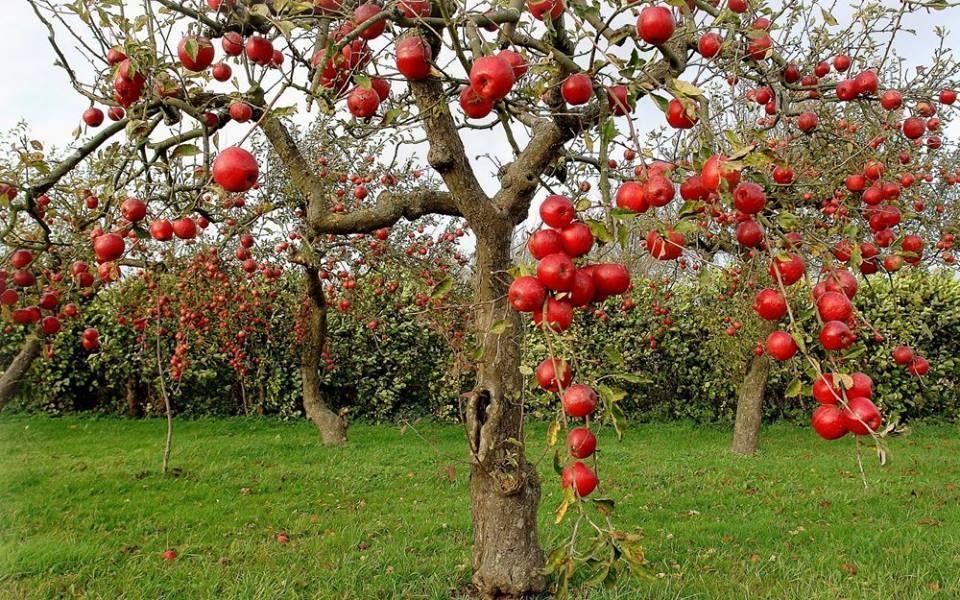 seger foto kebun buah buahan unik lucu keren dan hebat