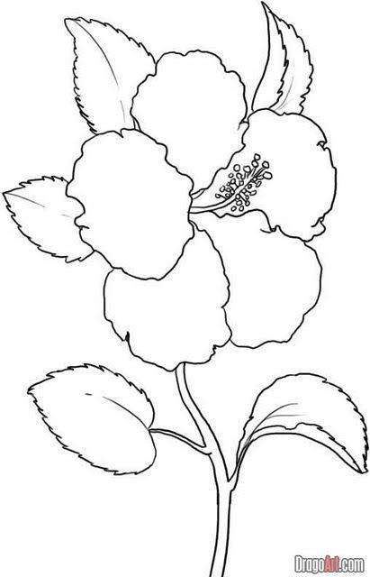 Lukisan Bunga Kertas Bermanfaat Image Result for Lukisan Bunga Raya Uda Flower Line Drawings