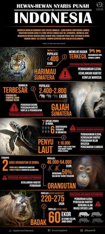 banyak hewan langka di indonesia yang terancam punah meski demikian perdagangan ilegal hewan