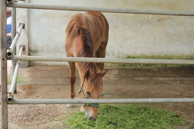 welcome to perlis equine centre