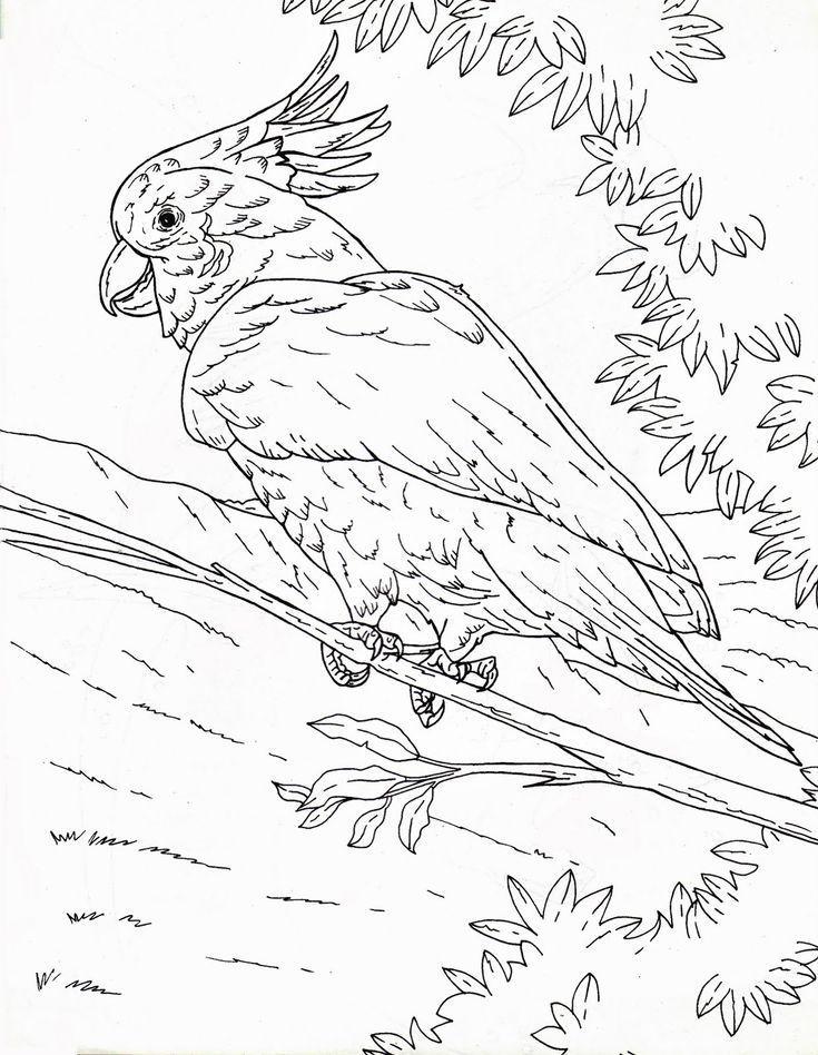 gambar burung kakak tua untuk mewarnai mushola gambar burung kakak tua jambul kuning gambar burung kakak