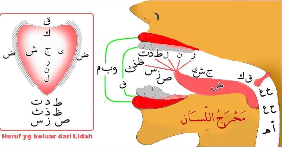 36 kumpulan pengucapan huruf hijaiyah belajar mengaji dengan metode tajwid terupdate