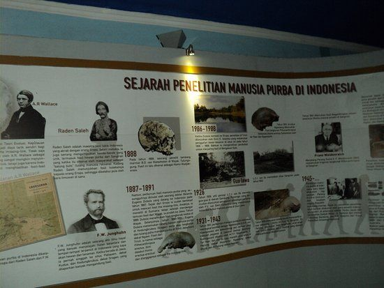 sangiran museum and early man site histori penelitian manusia purba di indonesia di museum sangiran